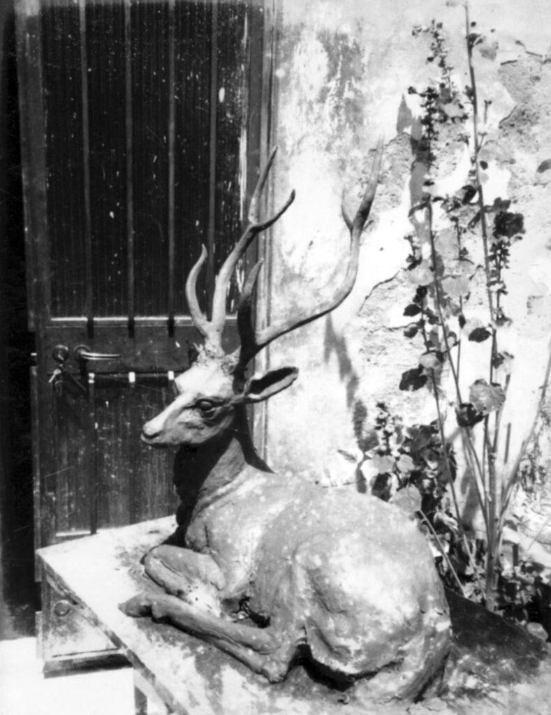 Cervo, 1973